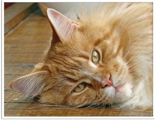 Pet Insurance for your four-legged family