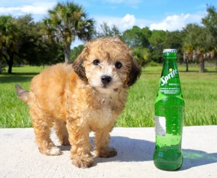 TOP 5 Cutest and Rarest Mixed Dog Breeds