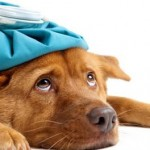 Sick as a Dog: Warning Signs Your Pooch is Sick