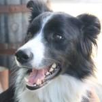 6 Ways to Save Money on Pet Care