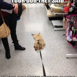 33 Dog Friendly Stores : See the List!