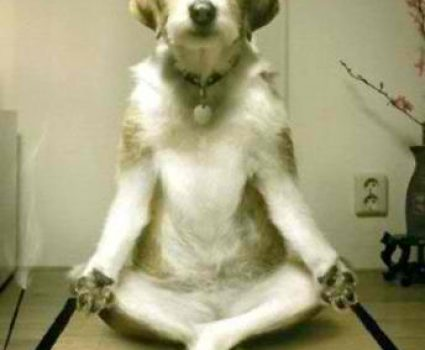 What is Doga Anyway?  Yoga for Dogs