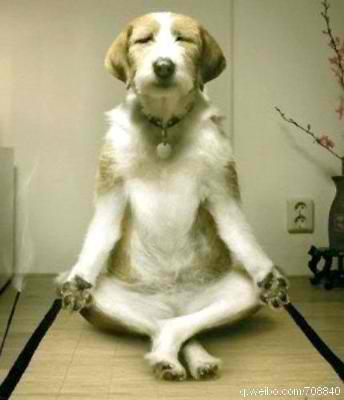 What is Doga? Dog Yoga