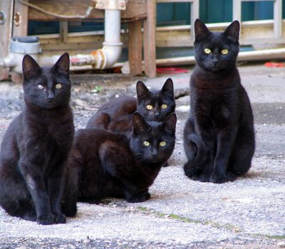 17 Reasons to Own a Black Cat