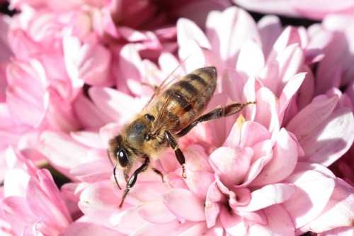 How Your Garden May Actually Be Killing Bees