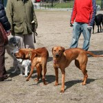 Dog Park Guidelines You Should Know