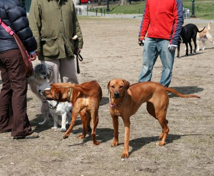 dog park guidelines