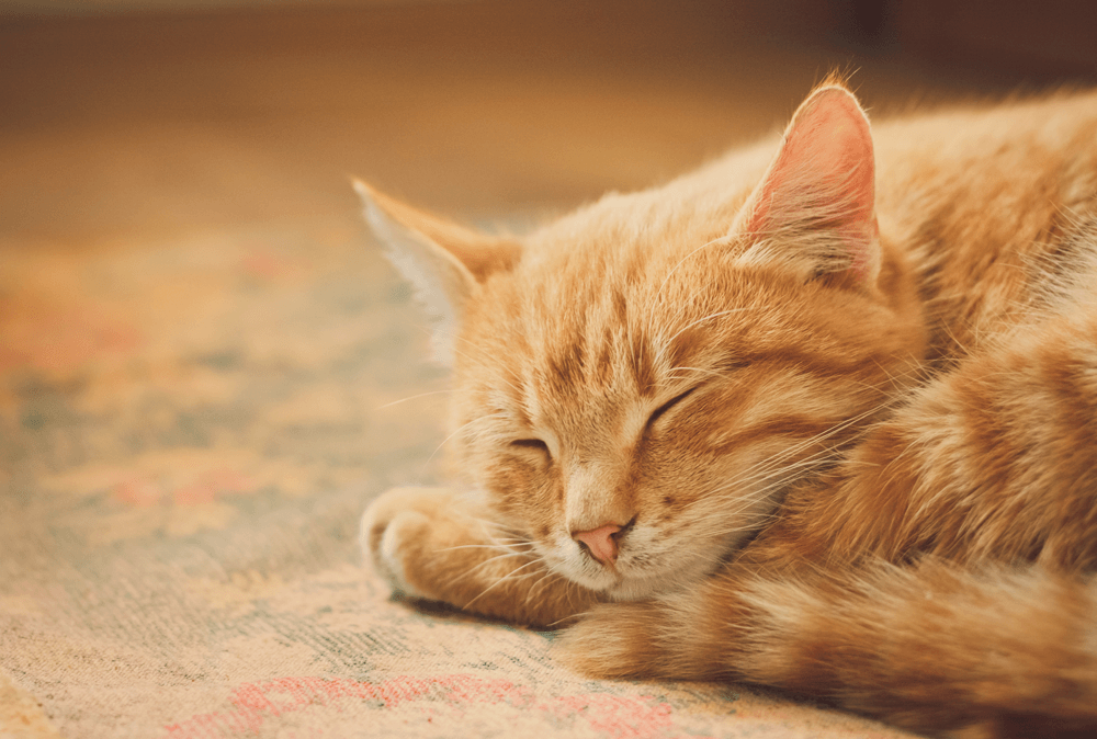 4 toys to transform your home into a cat haven.
