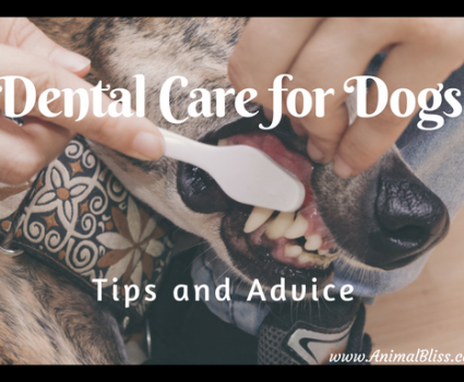 Dental Care for Dogs, Tips and Advice: Canine Oral Hygiene