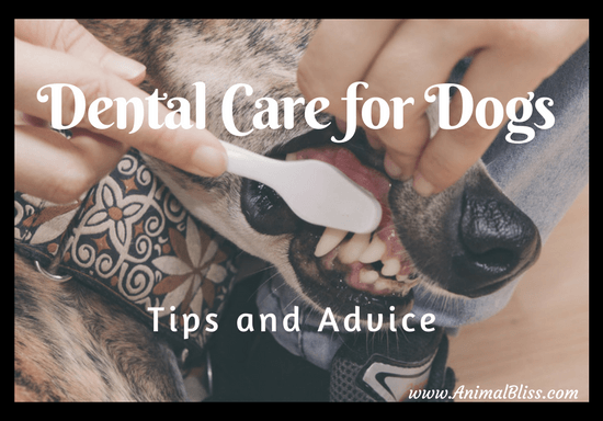 Dental care for dogs is extremely important. Who knows where your dog's mouth has been.