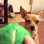 How To Train ANY Dog To Fetch