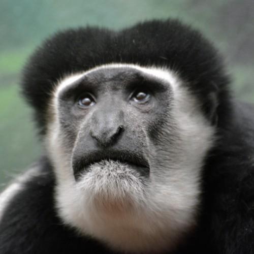 Celebrating Monkey Day