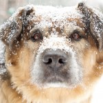 Winter Care for Your Dog