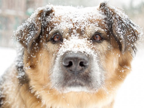 Winter care for your dog is as important as it is in the summer.