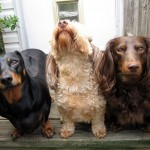 Choosing A Dog Breed (That's Right For You)