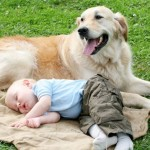 7 Reasons Your Family Needs a Dog