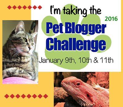 Pet Blogger Challenge 2016