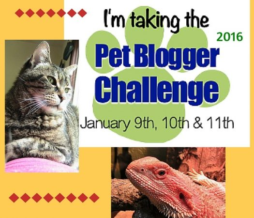 It's time for the 6th annual Pet Blogger Challenge 2016, meant to celebrate, motivate, educate, and connect Pet Bloggers worldwide. Are you ready?