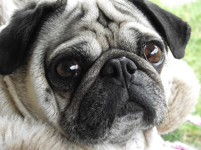 What Is The Most Expensive Dog Breed To Own