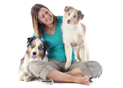 What is Propolis, and is it good for my dog?