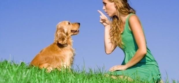6 Tricks You Should Teach Your Dog