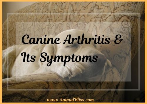 Treating Canine Arthritis and Its Symptoms