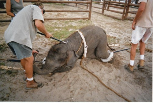 Ringling Bros Elephant Acts to End 18 Months Earlier Than Expected