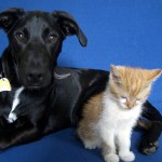 Relocating Your Pets in a Move : What to Expect
