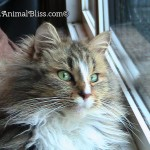 Maisy the Cat : Almost Wordless Wednesday