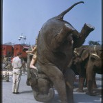 Ringling Bros Elephant Acts to End 18 Months Earlier