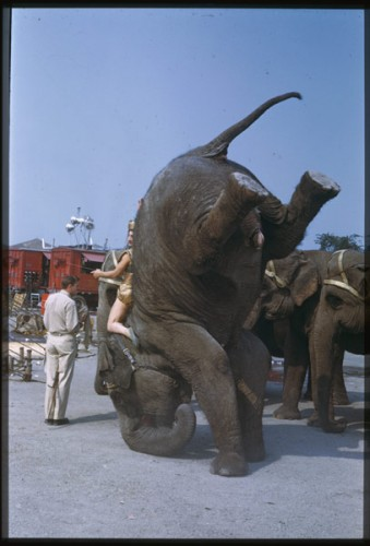 Good News! Ringling Bros elephant acts to end 18 Months earlier than expected.