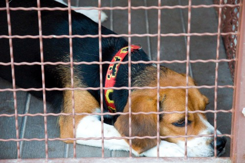 Need Valentine's Day Plans? Consider Helping an Animal Shelter.