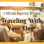 7 Must Haves When Traveling With Your Dog