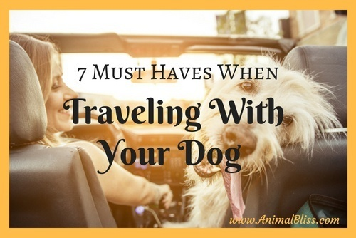Are you planning a trip and want to take your dog along? If you think that it sounds too complicated, check out this list of 7 must haves when traveling with your dog that will help make it easier than you think.