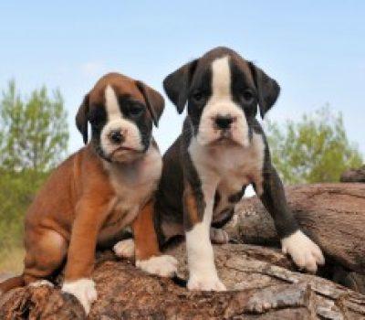 Canine Enrichment: Create a Backyard Paradise