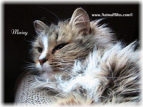 Maisy Cat, Animal Bliss