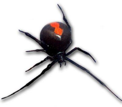 Poisonous Pest Control : Know the Dangers
