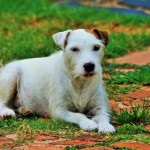 Teaching Your Dog Who is Alpha, Obedience Training