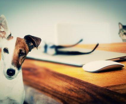 Biggest Inheritances Left To Pets