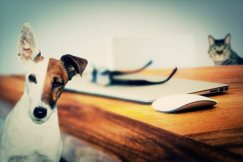 Some of the biggest inheritances left to pets comes to millions of dollars.