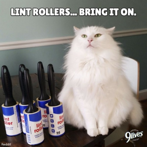 Well-known celebrity, Morris the Cat, gives awesome kitty grooming advice.