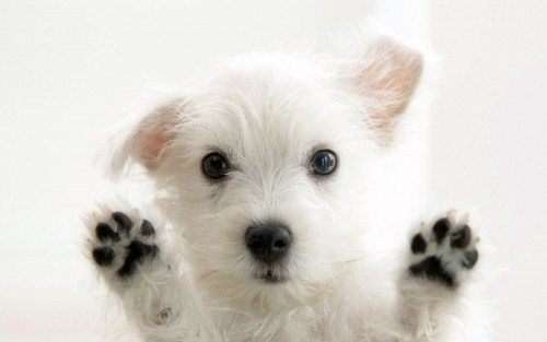 Potty training your puppy doesn't have to be a nightmare. - www.animalbliss.com