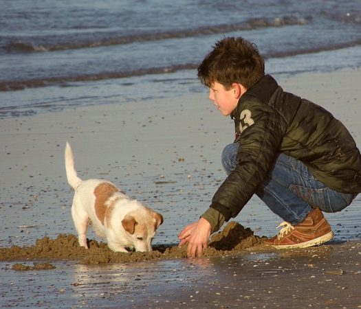 Kids and Dogs: Safe Interactions at the Park