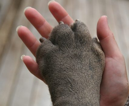 Benefits of Spaying or Neutering Your Dog