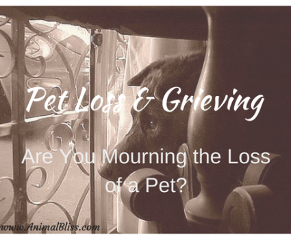 Pet Loss and Grieving - a Natural Process