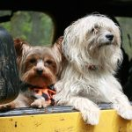 Top 5 American Dog Friendly Cities