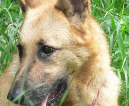 Pet Loss and Grieving, Are You Mourning a Pet Companion?