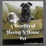 5 Benefits of Having A House Pet: Oh, the Joys