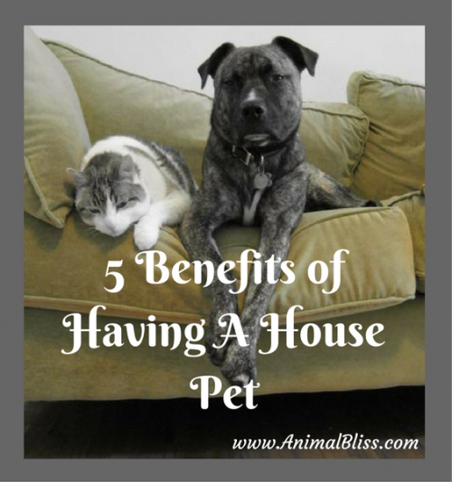 5 Benefits of Having a House Pet