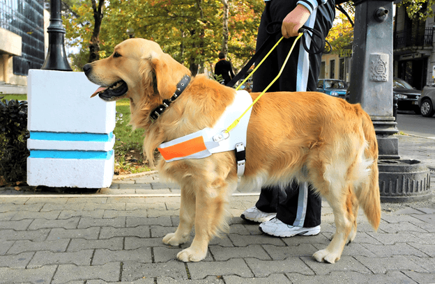 2 Cancer Sniffing Dogs That Saved Their Owners